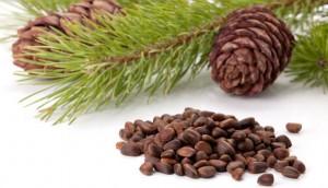 pinenuts
