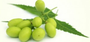 neem-seeds